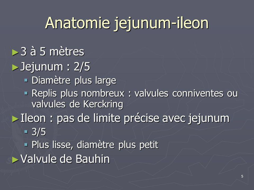 5 Anatomie jejunum-ileon ► 3 à 5 mètres ► Jejunum : 2/5  Diamètre plus large  Replis plus nombreux : valvules conniventes ou valvules de Kerckring ►
