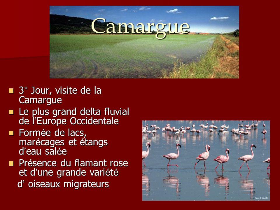 Camargue 3° Jour, visite de la Camargue 3° Jour, visite de la Camargue Le plus grand delta fluvial de l ' Europe Occidentale Le plus grand delta fluvi