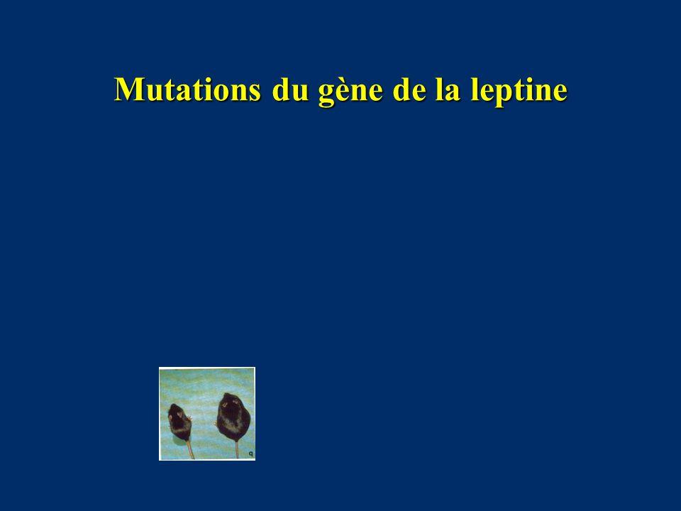 Mutations du gène de la leptine