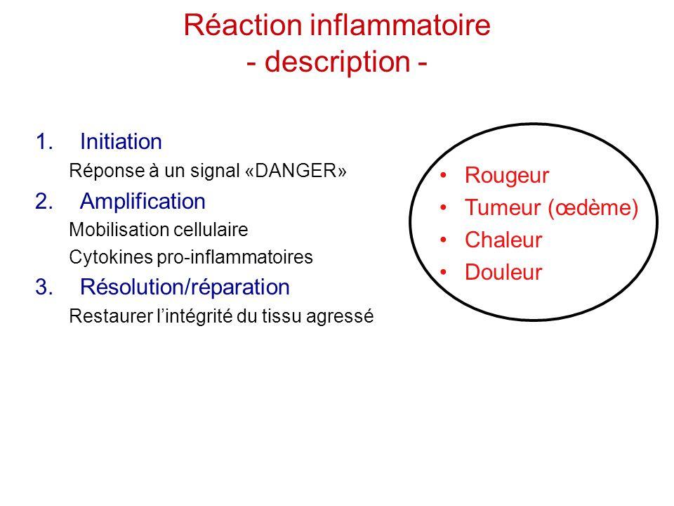 1.Initiation Réponse à un signal «DANGER» 2.Amplification Mobilisation cellulaire Cytokines pro-inflammatoires 3.Résolution/réparation Restaurer l'int