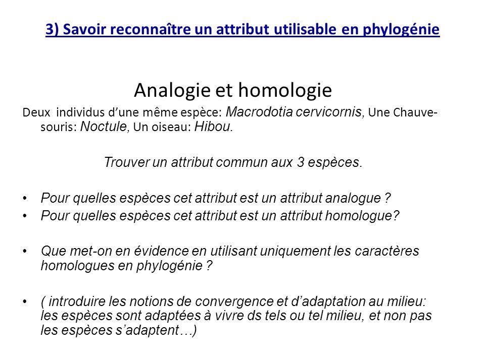 3) Savoir reconnaître un attribut utilisable en phylogénie Analogie et homologie Deux individus d'une même espèce: Macrodotia cervicornis, Une Chauve-