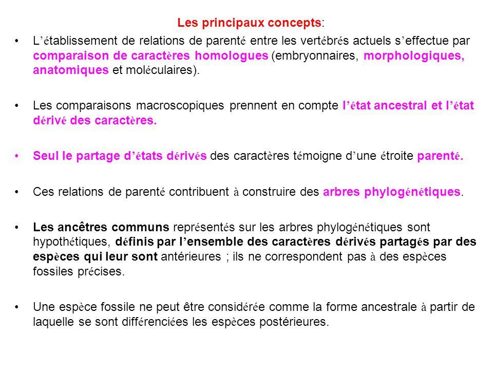 Les principaux concepts: L 'é tablissement de relations de parent é entre les vert é br é s actuels s ' effectue par comparaison de caract è res homol