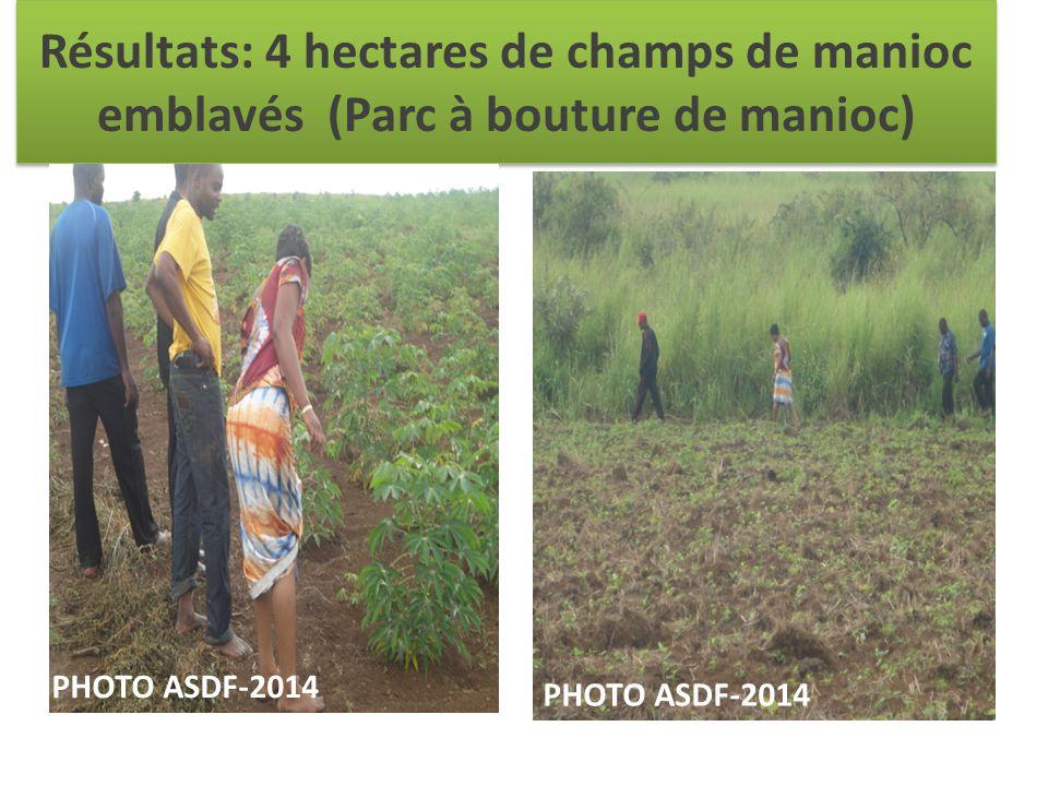 Résultats: 4 hectares de champs de manioc emblavés (Parc à bouture de manioc) PHOTO ASDF-2014