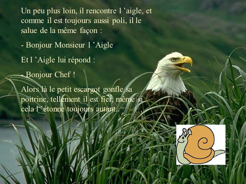 Un peu plus loin, il rencontre l 'aigle, et comme il est toujours aussi poli, il le salue de la même façon : - Bonjour Monsieur l 'Aigle Et l 'Aigle l