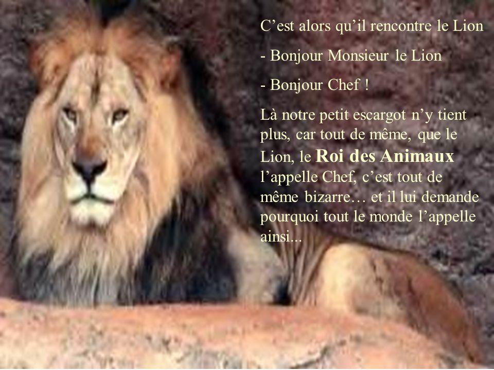 C'est alors qu'il rencontre le Lion - Bonjour Monsieur le Lion - Bonjour Chef ! Là notre petit escargot n'y tient plus, car tout de même, que le Lion,