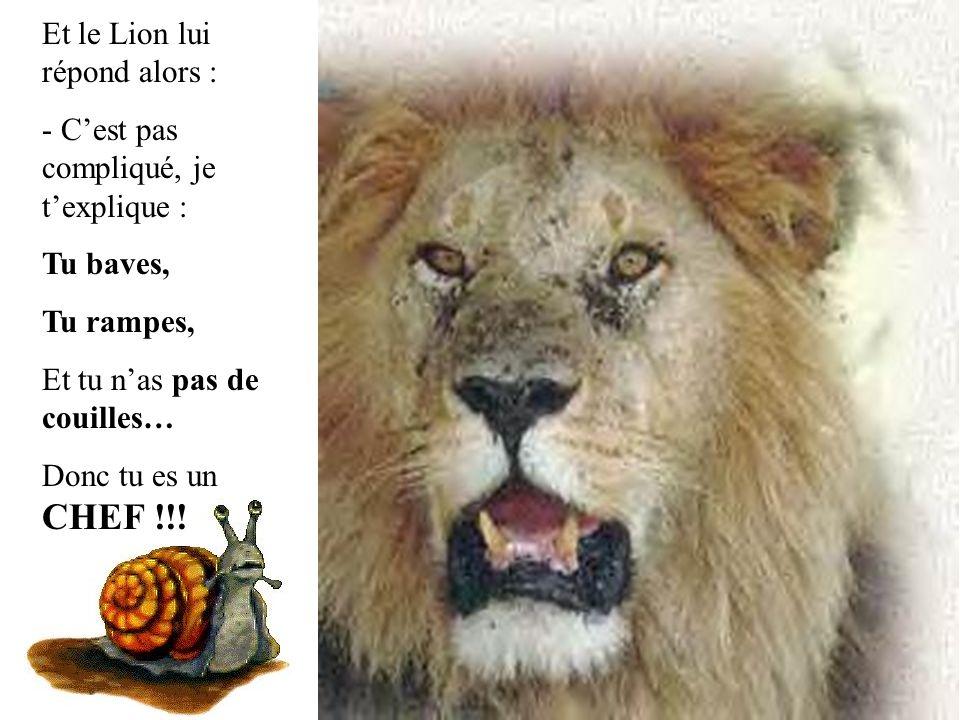 Et le Lion lui répond alors : - C'est pas compliqué, je t'explique : Tu baves, Tu rampes, Et tu n'as pas de couilles… Donc tu es un CHEF !!!