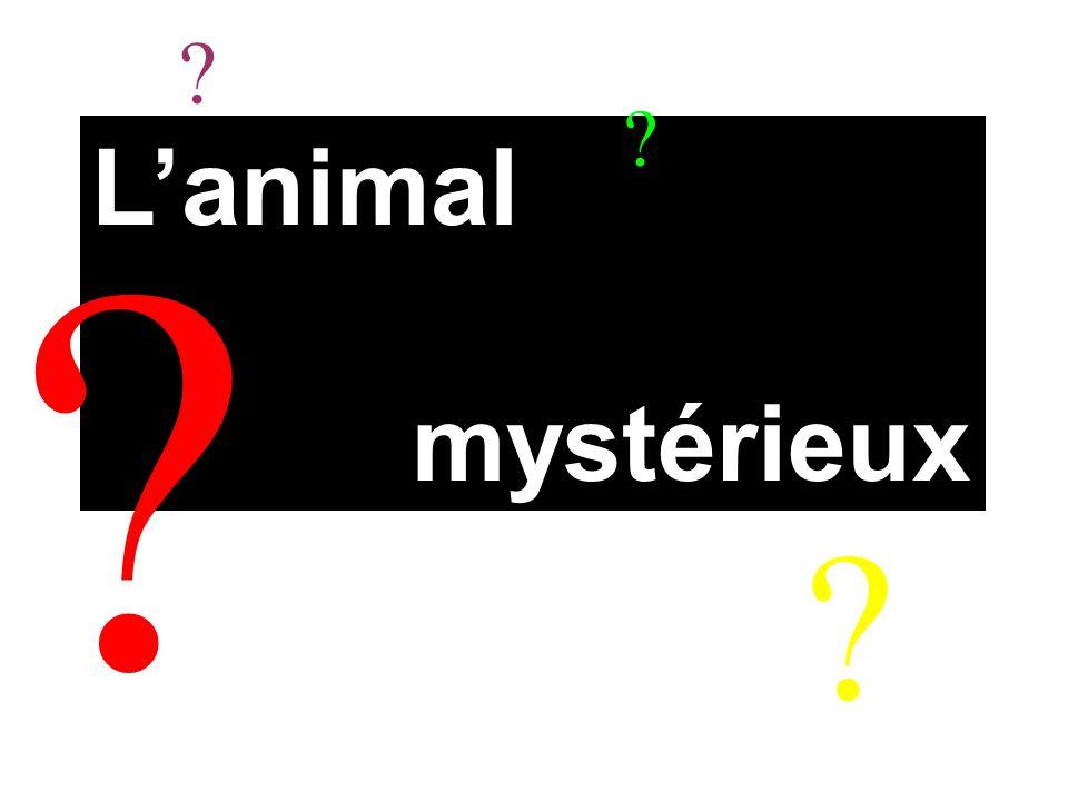 L'animal mystérieux ? ? ? ?