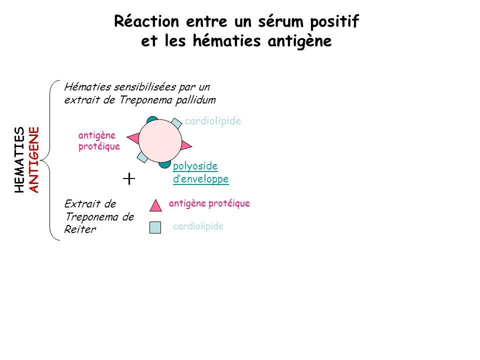 cardiolipide polyoside d'enveloppe antigène protéique Hématies sensibilisées par un extrait de Treponema pallidum Extrait de Treponema de Reiter antig