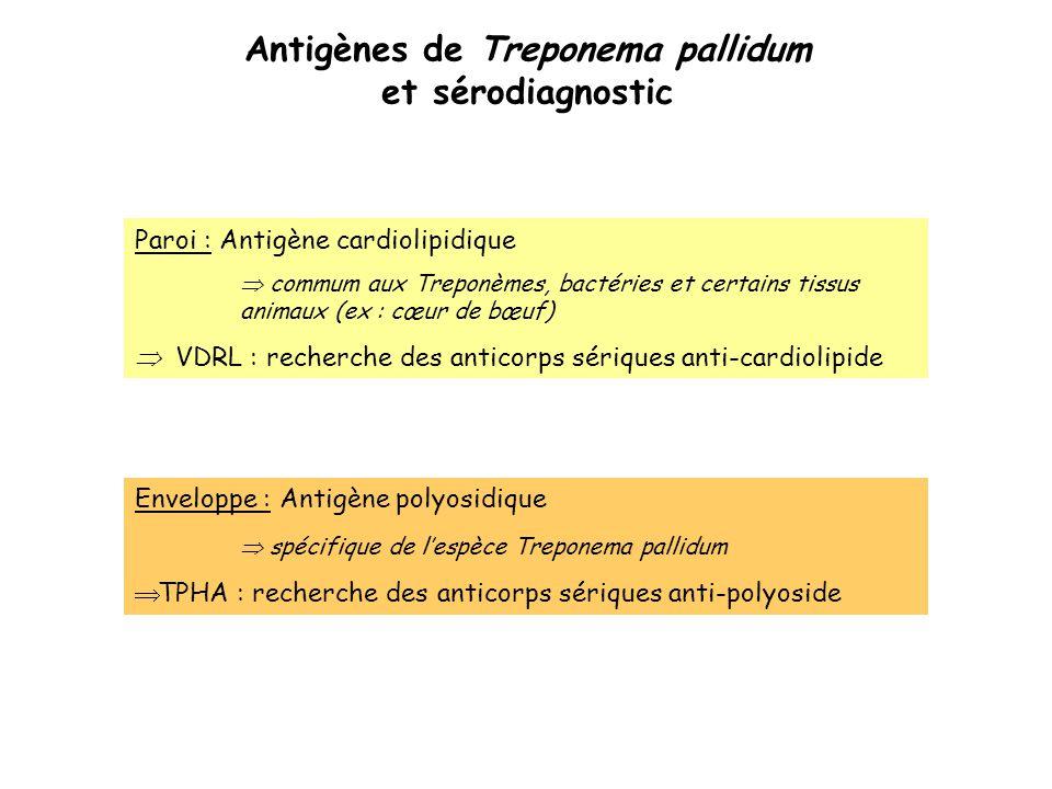Antigènes de Treponema pallidum et sérodiagnostic Enveloppe : Antigène polyosidique  spécifique de l'espèce Treponema pallidum  TPHA : recherche des