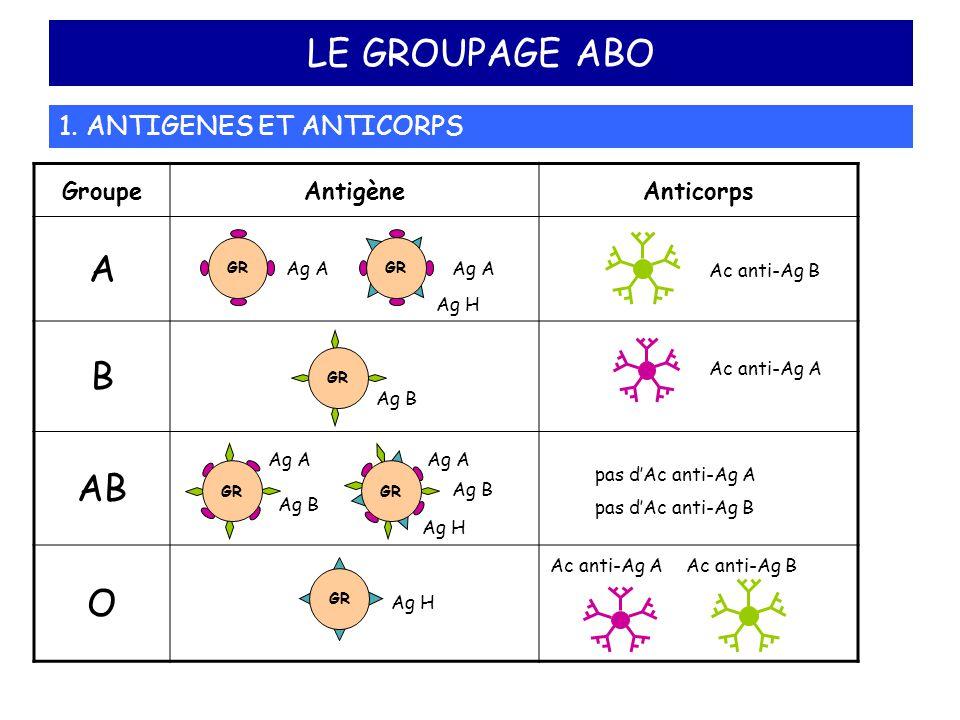 GroupeAntigèneAnticorps A B AB O LE GROUPAGE ABO 1. ANTIGENES ET ANTICORPS GR Ag H Ac anti-Ag B Ac anti-Ag A Ac anti-Ag BAc anti-Ag A pas d'Ac anti-Ag