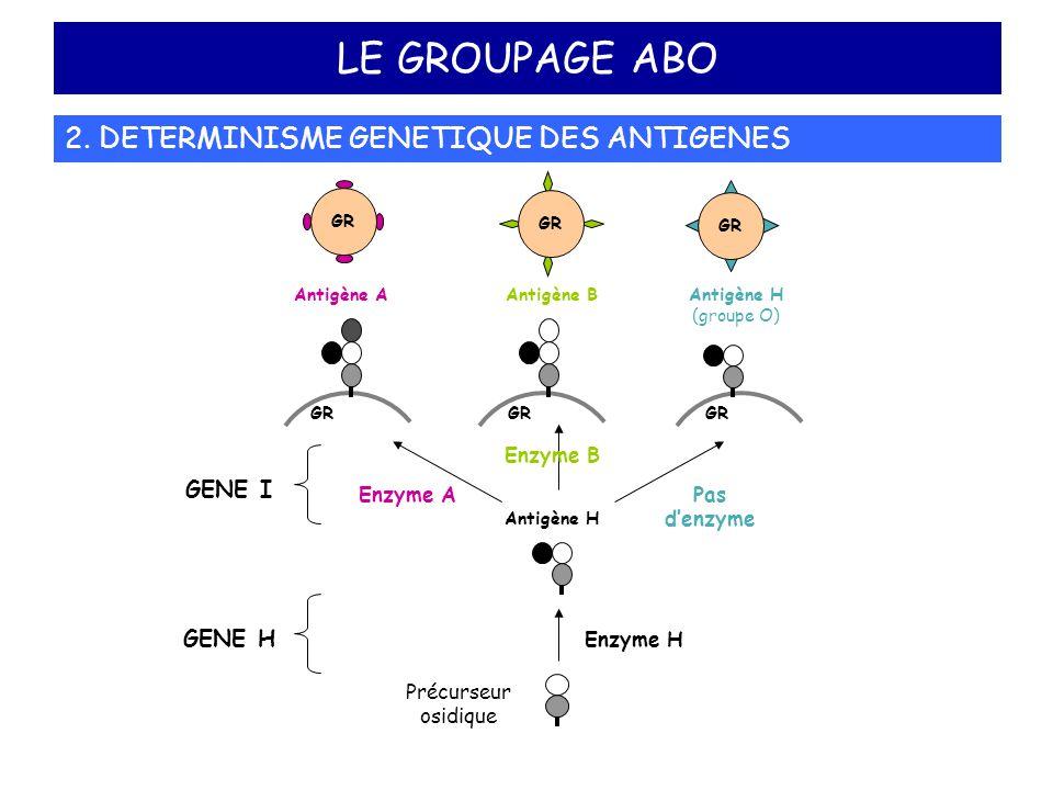 LE GROUPAGE ABO 2. DETERMINISME GENETIQUE DES ANTIGENES Précurseur osidique Antigène H Antigène A Enzyme A GR Antigène B Enzyme B GR Antigène H (group