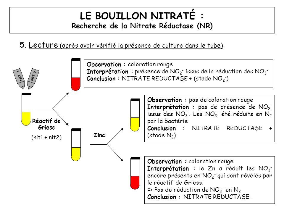 5. Lecture (après avoir vérifié la présence de culture dans le tube) LE BOUILLON NITRATÉ : Recherche de la Nitrate Réductase (NR) Réactif de Griess (n