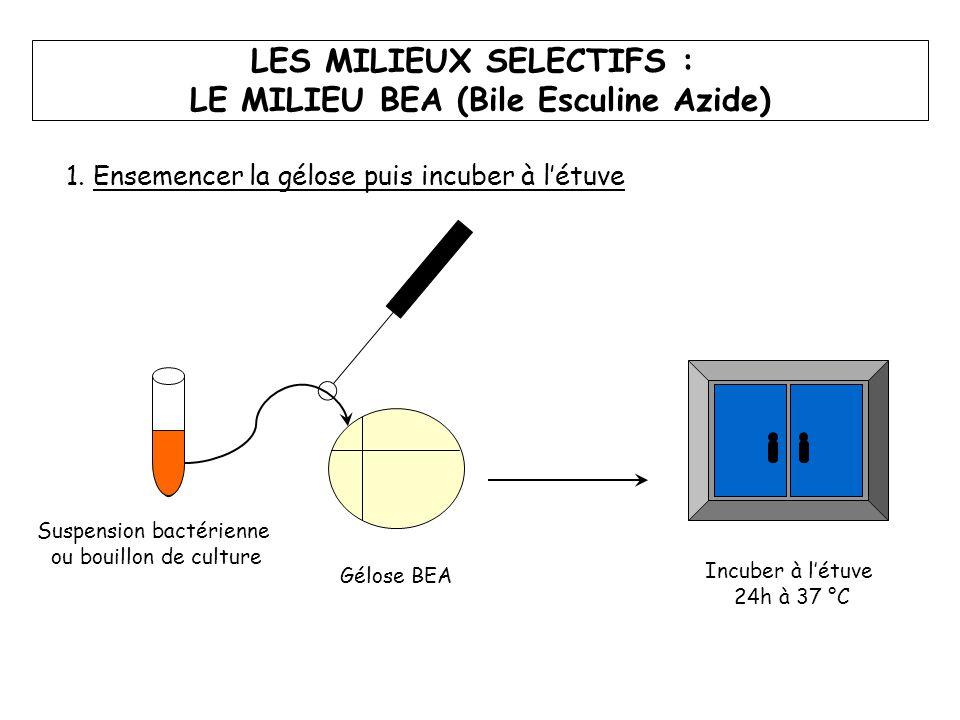 LES MILIEUX SELECTIFS : LE MILIEU BEA (Bile Esculine Azide) Suspension bactérienne ou bouillon de culture Gélose BEA Incuber à l'étuve 24h à 37 °C 1.