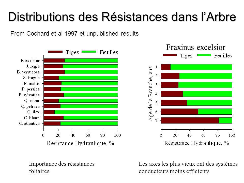 Distributions des Résistances dans l'Arbre Importance des résistances foliaires Fraxinus excelsior Les axes les plus vieux ont des systèmes conducteur
