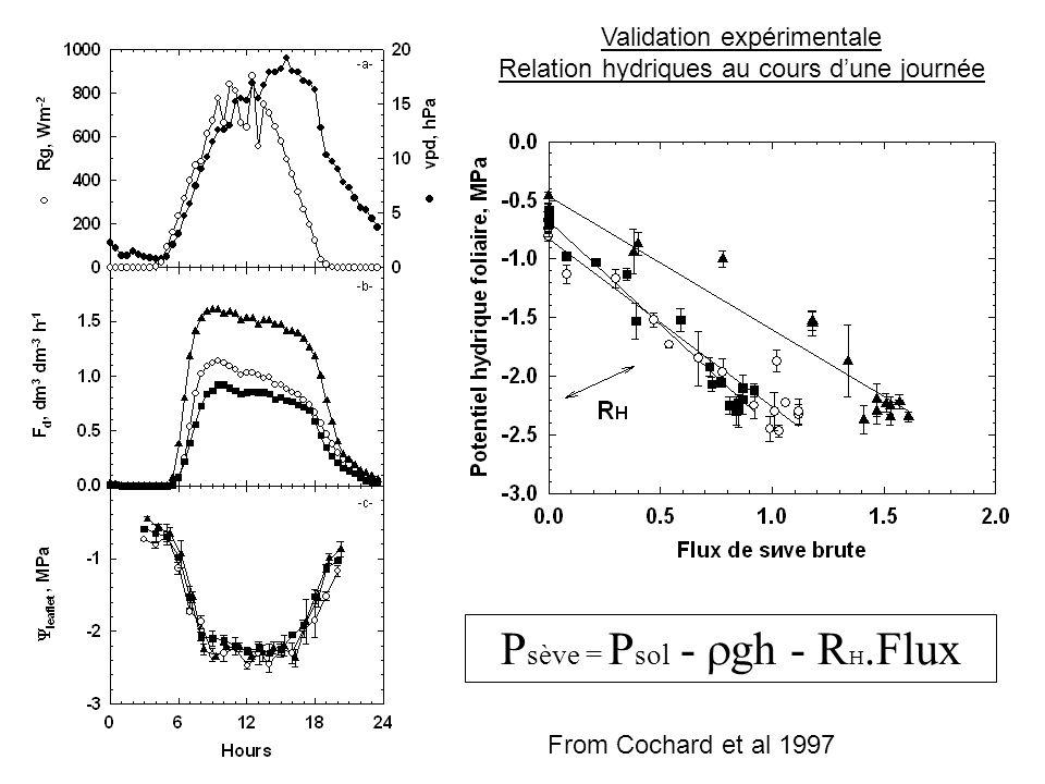 P sève = P sol -  gh - R H.Flux Validation expérimentale Relation hydriques au cours d'une journée From Cochard et al 1997
