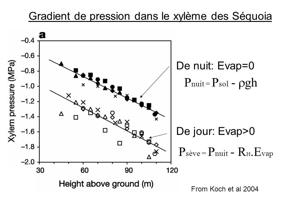 De nuit: Evap=0 P nuit = P sol -  gh De jour: Evap>0 P sève = P nuit - R H.E vap Gradient de pression dans le xylème des Séquoia From Koch et al 2004