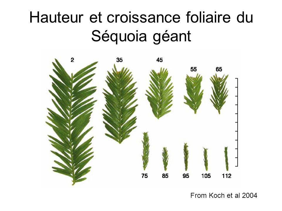 Hauteur et croissance foliaire du Séquoia géant From Koch et al 2004