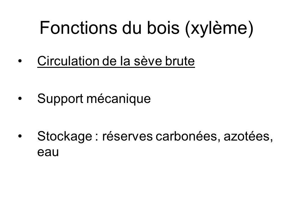 Fonctions du bois (xylème) Circulation de la sève brute Support mécanique Stockage : réserves carbonées, azotées, eau