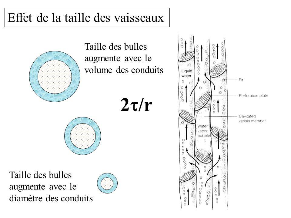 Effet de la taille des vaisseaux Taille des bulles augmente avec le diamètre des conduits Taille des bulles augmente avec le volume des conduits 2  /