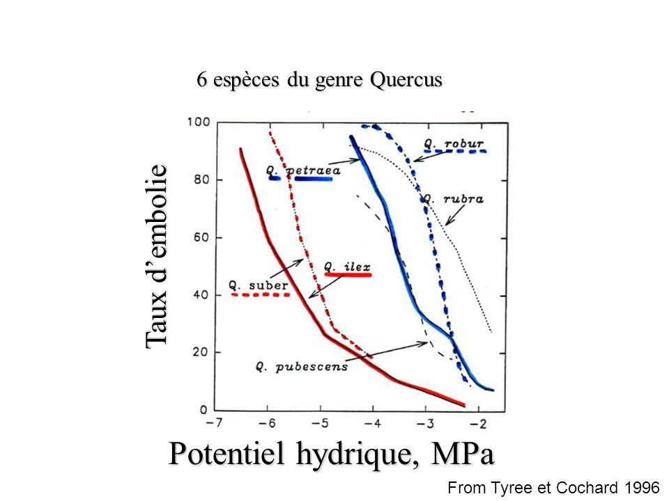 Taux d'embolie Potentiel hydrique, MPa 6 espèces du genre Quercus From Tyree et Cochard 1996