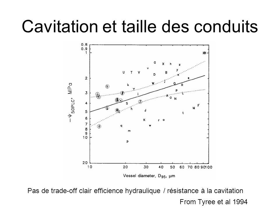 Cavitation et taille des conduits Pas de trade-off clair efficience hydraulique / résistance à la cavitation From Tyree et al 1994
