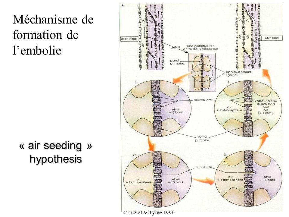 « air seeding » hypothesis Cruiziat & Tyree 1990 Méchanisme de formation de l'embolie