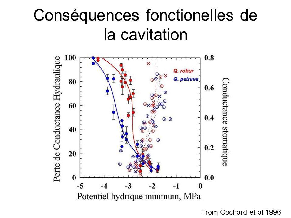 Conséquences fonctionelles de la cavitation From Cochard et al 1996