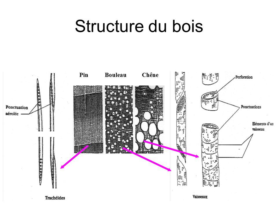 PinBouleauChêne Structure du bois