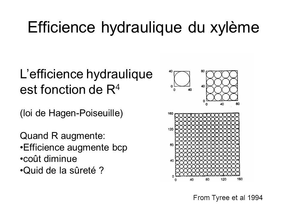 Efficience hydraulique du xylème L'efficience hydraulique est fonction de R 4 (loi de Hagen-Poiseuille) Quand R augmente: Efficience augmente bcp coût