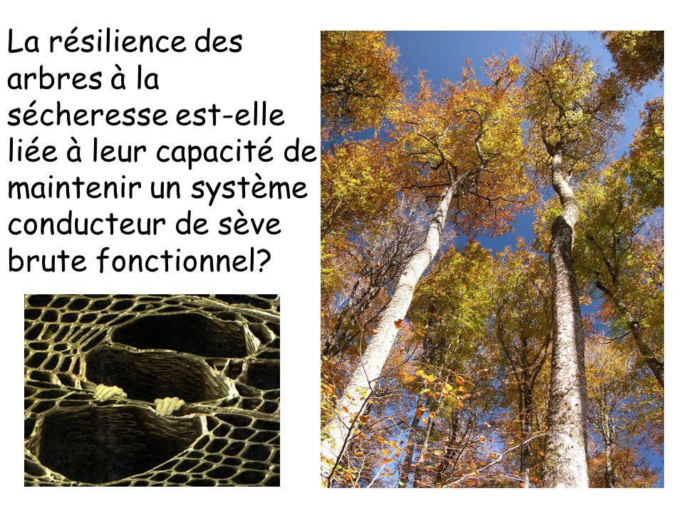 Le fonctionnement 'Hydraulique' des arbres P T  P = – R H *Flux Analogie à la loi d'Ohm R H =1/K H Cochard et al 1997 Cavitation Transpiration Pression de sève MPa Heures du jour