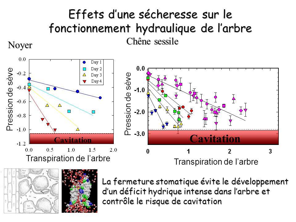 P50, MPa Le « Coût » de la cavitation Hacke et al 2001 Epaisseur des parois, µm P50, MPa Cochard et al 2007 collapse