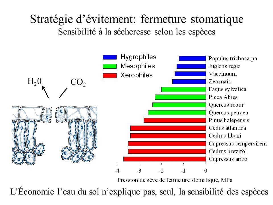 Stratégie d'évitement: fermeture stomatique Sensibilité à la sécheresse selon les espèces L'Économie l'eau du sol n'explique pas, seul, la sensibilité