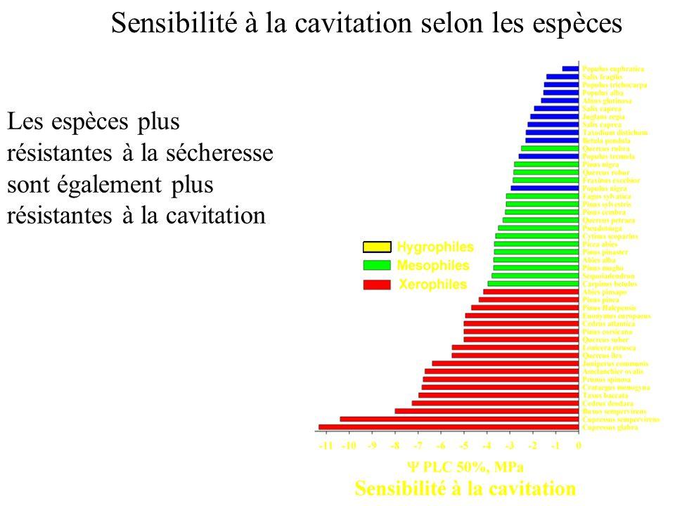 Sensibilité à la cavitation selon les espèces Les espèces plus résistantes à la sécheresse sont également plus résistantes à la cavitation