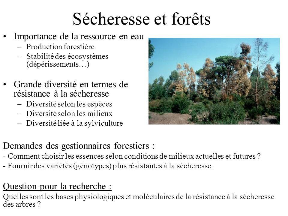 Sécheresse et forêts Importance de la ressource en eau –Production forestière –Stabilité des écosystèmes (dépérissements…) Grande diversité en termes