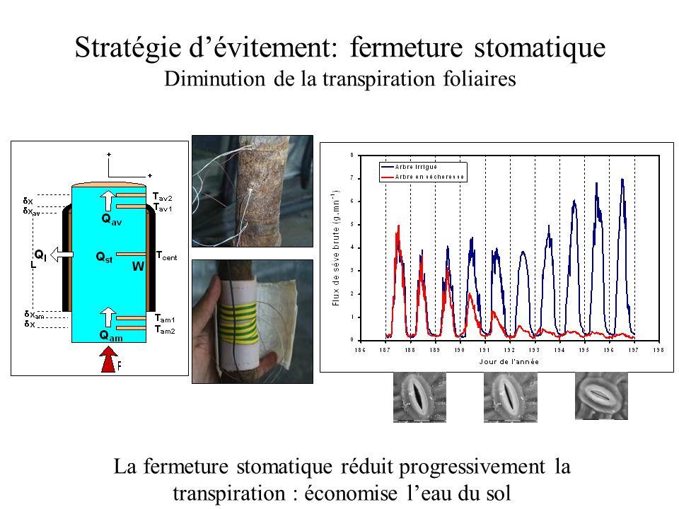 Stratégies de résistance à la sécheresse: évitement et tolérance Pression de sève, MPaTaux d'embolie, % Ouverture des stomates