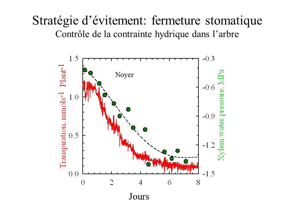 Stratégie d'évitement: fermeture stomatique Sensibilité à la sécheresse selon les espèces L'Économie l'eau du sol n'explique pas, seul, la sensibilité des espèces H20H20 CO 2