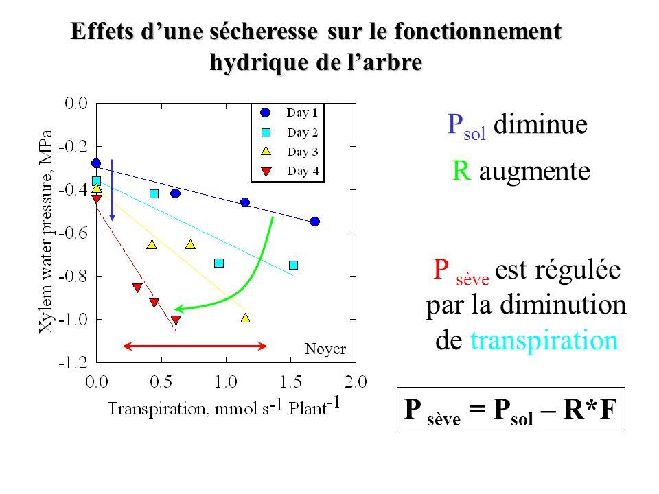 Effets d'une sécheresse sur le fonctionnement hydrique de l'arbre Noyer P sève = P sol – R*F P sol diminue P sève est régulée par la diminution de tra