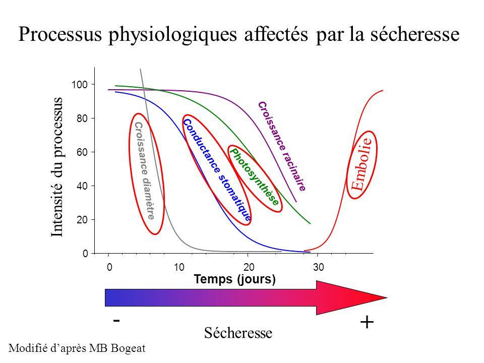 Temps (jours) 0102030 0 20 40 60 80 100 Croissance racinaire Photosynthèse Conductance stomatique Croissance diamètre Sécheresse - + Processus physiol