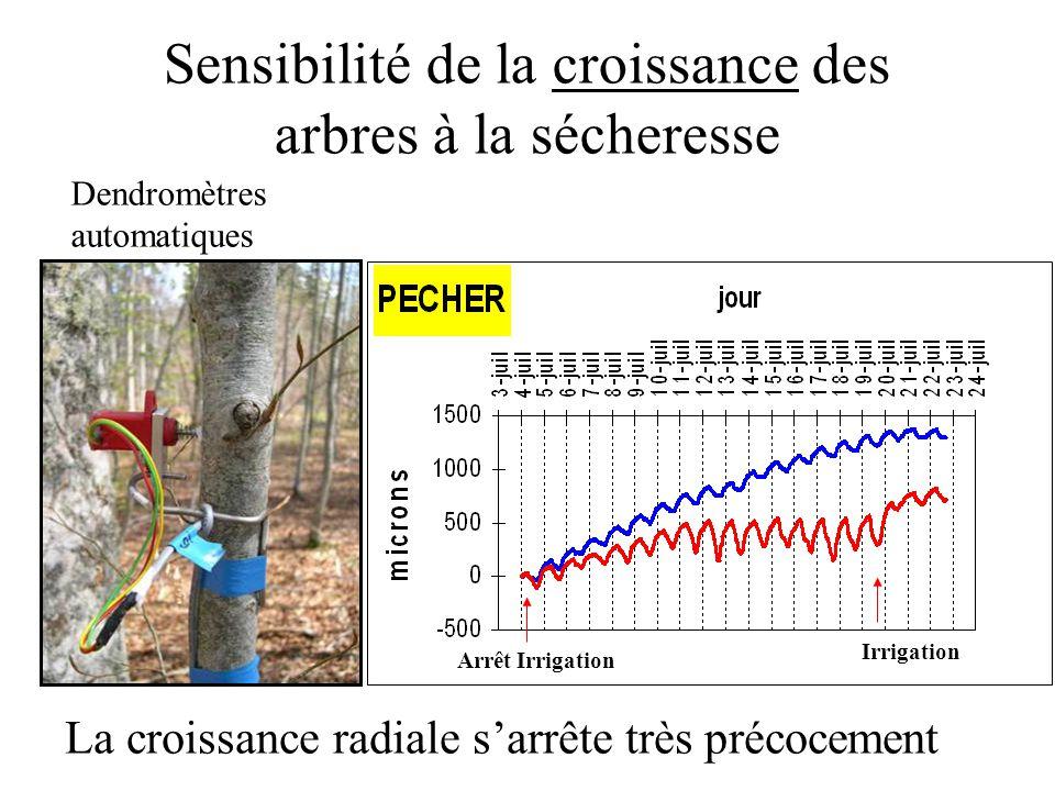 Sensibilité de la croissance des arbres à la sécheresse Arrêt Irrigation Irrigation Dendromètres automatiques La croissance radiale s'arrête très préc