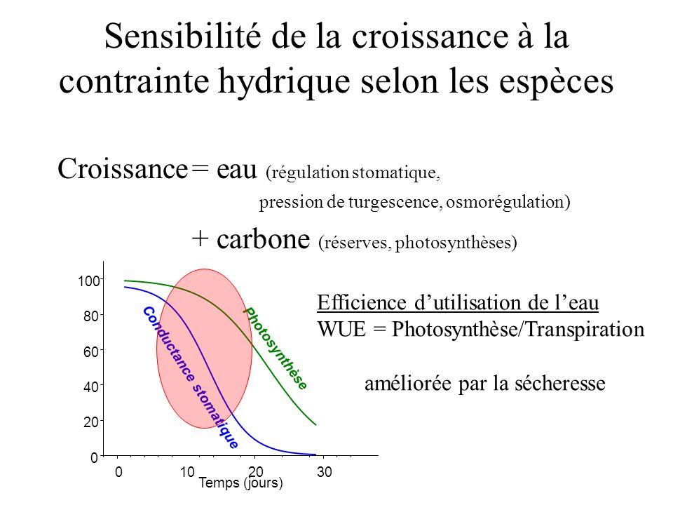 Sensibilité de la croissance à la contrainte hydrique selon les espèces Croissance= eau (régulation stomatique, pression de turgescence, osmorégulatio