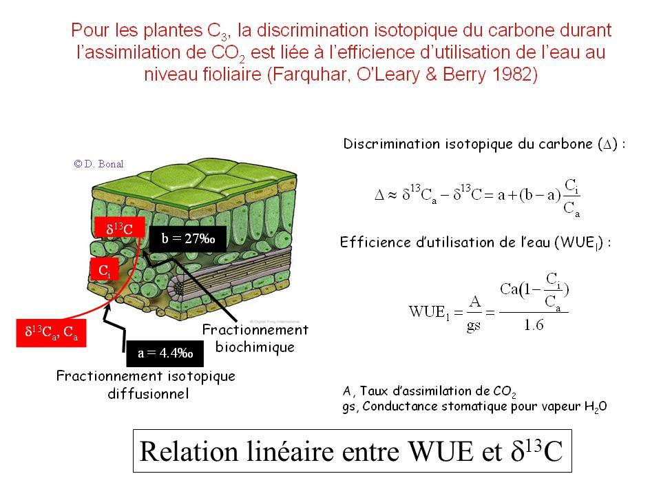 Relation linéaire entre WUE et  13 C