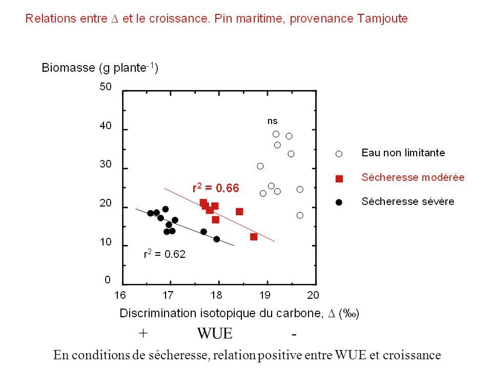 En conditions de sécheresse, relation positive entre WUE et croissance + WUE -