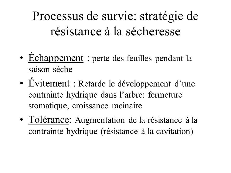 Processus de survie: stratégie de résistance à la sécheresse Échappement : perte des feuilles pendant la saison sèche Évitement : Retarde le développe