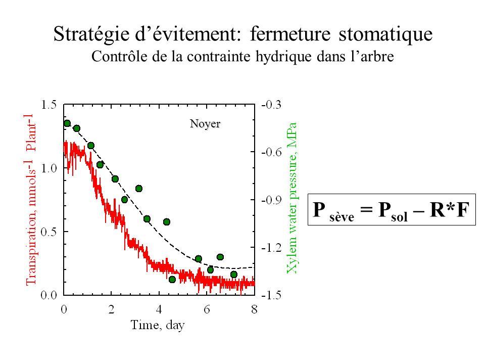 Noyer P sève = P sol – R*F Stratégie d'évitement: fermeture stomatique Contrôle de la contrainte hydrique dans l'arbre