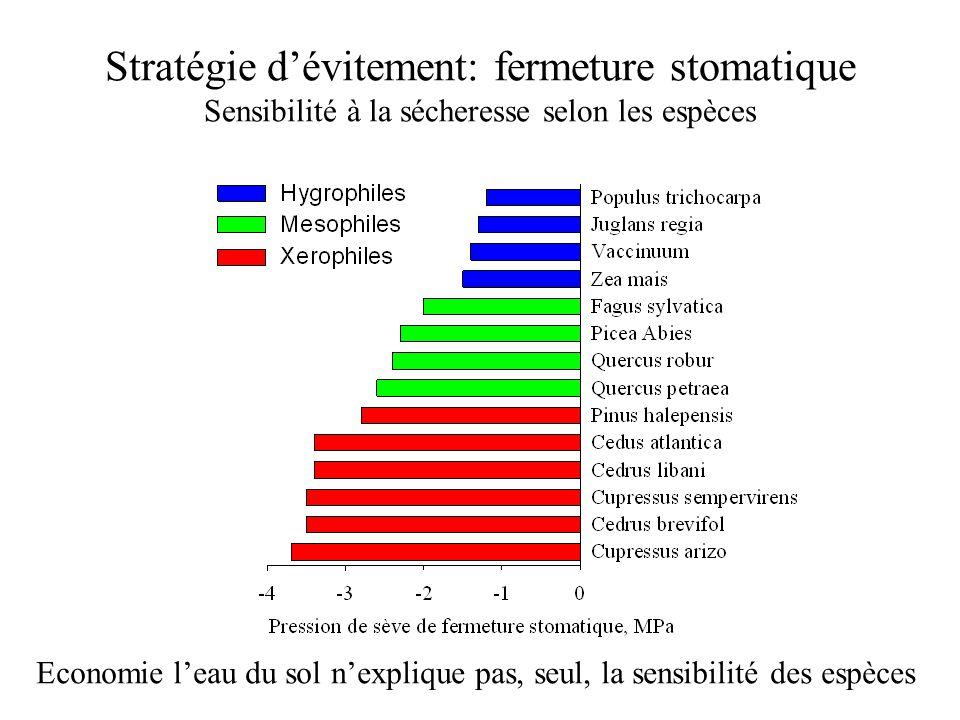 Stratégie d'évitement: fermeture stomatique Sensibilité à la sécheresse selon les espèces Economie l'eau du sol n'explique pas, seul, la sensibilité d