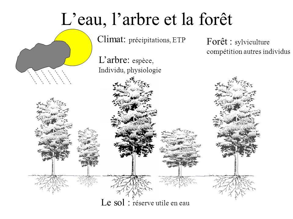L'eau, l'arbre et la forêt Forêt : sylviculture compétition autres individus L'arbre: espèce, Individu, physiologie Le sol : réserve utile en eau Clim