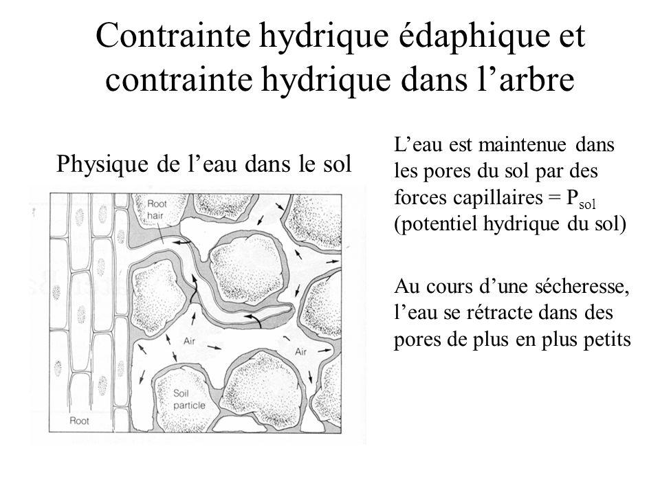 Physique de l'eau dans le sol L'eau est maintenue dans les pores du sol par des forces capillaires = P sol (potentiel hydrique du sol) Au cours d'une