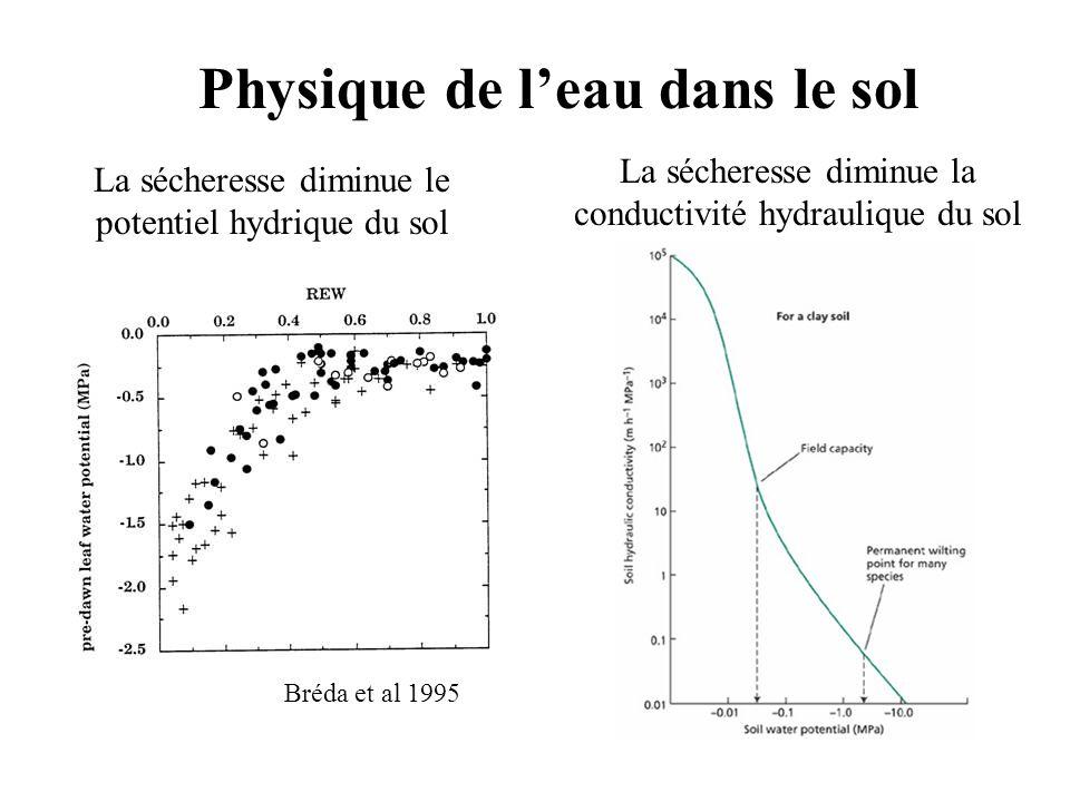 Physique de l'eau dans le sol La sécheresse diminue le potentiel hydrique du sol La sécheresse diminue la conductivité hydraulique du sol Bréda et al