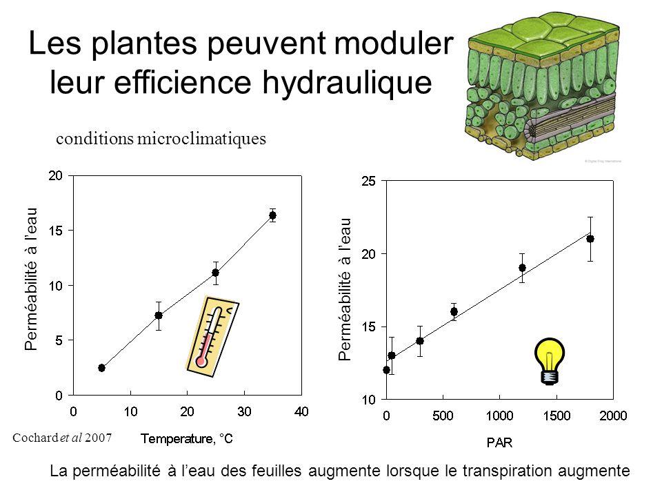 Les plantes peuvent moduler leur efficience hydraulique Cochard et al 2007 conditions microclimatiques Perméabilité à l'eau La perméabilité à l'eau des feuilles augmente lorsque le transpiration augmente