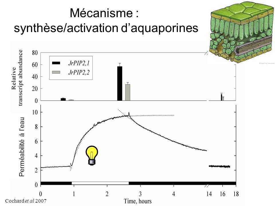 Mécanisme : synthèse/activation d'aquaporines Perméabilité à l'eau Cochard et al 2007